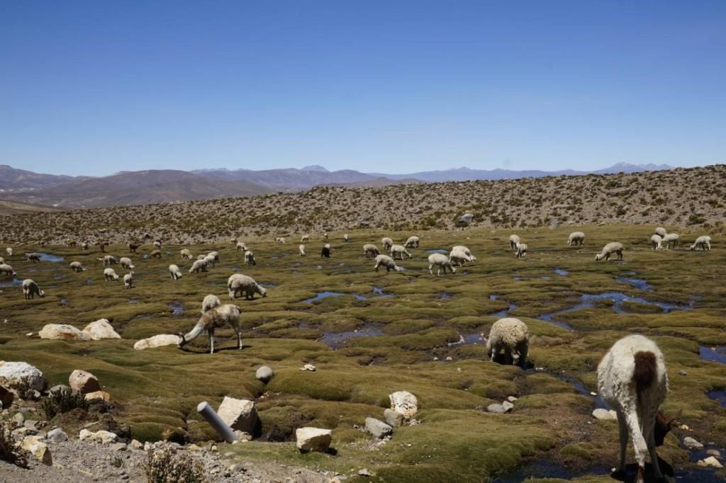 Reserva Aguada Blanca