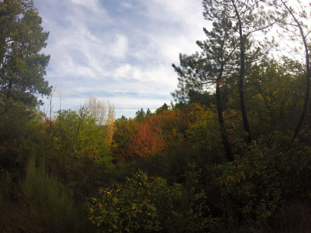 Galaroza en otoño